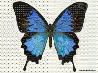 butterfly-mosaic